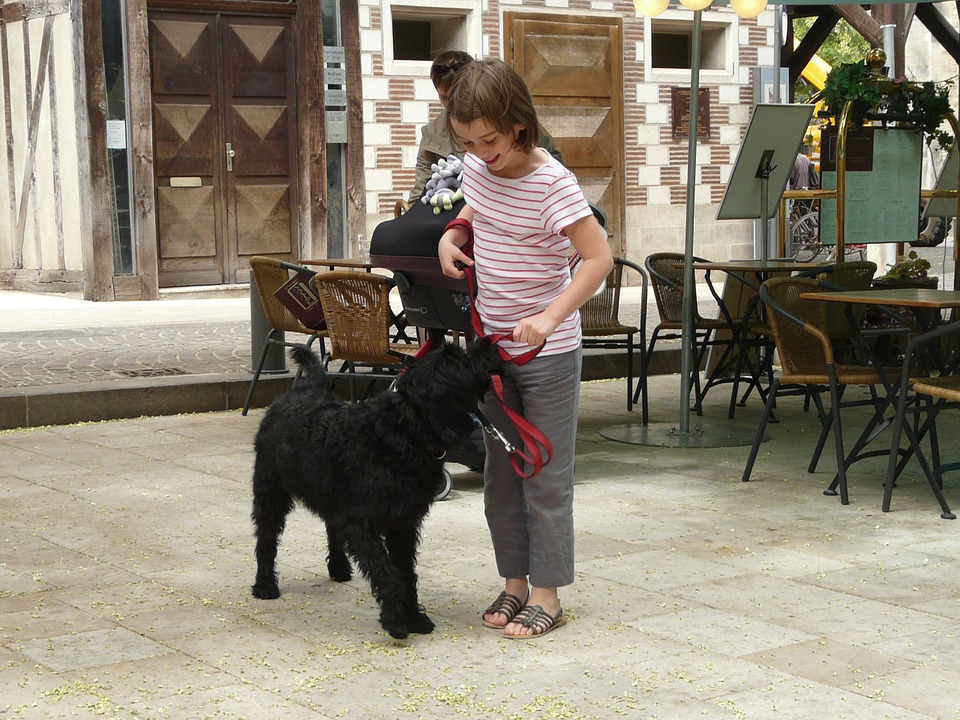 dog 363906 960 720 - 5 Simple Pointers to Teach Your Kids How to Treat Dogs